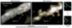 STM Spines_980x387.jpg