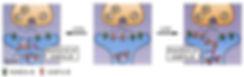 STM Insertion of Receptors.jpg