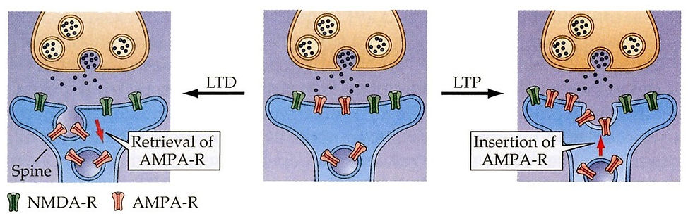 STM Insertion of Receptors.jpg