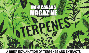 A Brief Explanation of Terpenes and Extracts