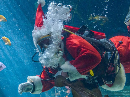 Santa & Christmas at the Vancouver Aquarium!
