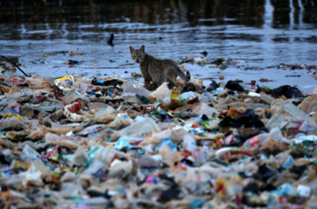 Stepping up the battle against marine plastic pollution — The case of Indonesia by Layla Moccia