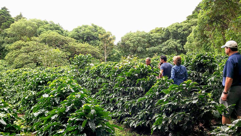 Finca Life Monteverde
