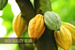 High Quality Bean