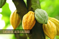 Cacao de Alta Calidad