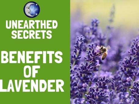 Unearthed Secrets - Lavender
