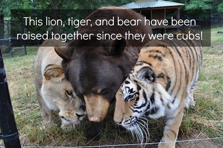 lions& tigers&bears.jpg