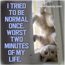 normal once.jpg
