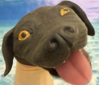 Cody the Coding Dog