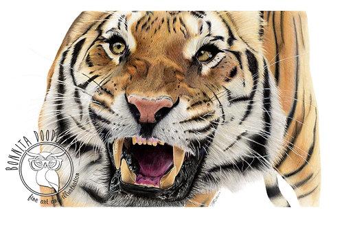 Original Tiger Pencil drawing