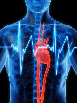 Heart Rate Training Zones