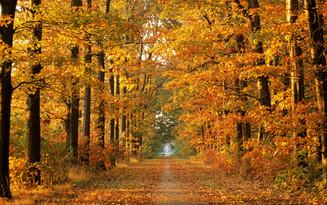 The Autumn Rut