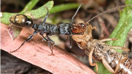 Ant Navigation