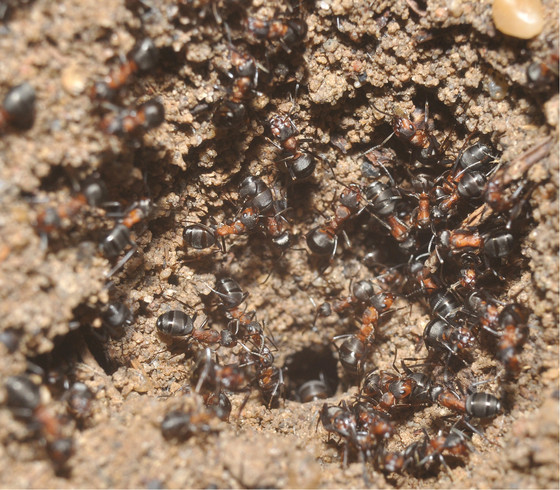 Ants Trapped In Nuclear Bunker