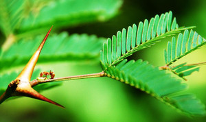 Ants and Plants