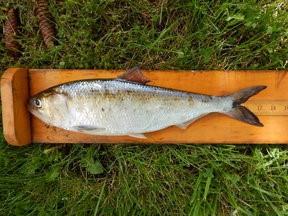 Curtosy of NJDEP Div. of Fish & Wildlife