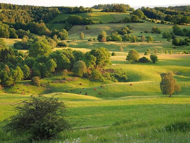 cattle grazing in a karst landscape mich