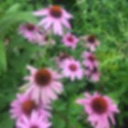 Pink Flowers.JPG