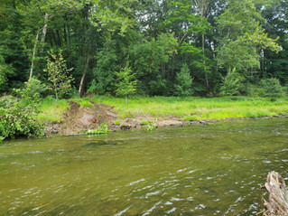 Press Release: MWA awarded $175k to improve beneficial plant life along the River