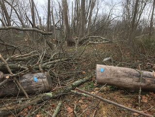 NOTES FROM A MUSKY TRAIL HIKER #8: A Messy Forest is a Healthy Forest