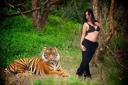 Tiger, Tiger by Peter Pickering Photography
