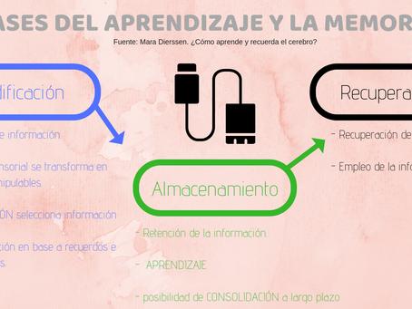 APRENDIZAJE Y MEMORIA: ¿CÓMO FUNCIONAN?.