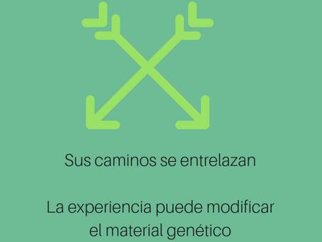 EPIGENÉTICA: CUANDO LOS GENES Y LAS EXPERIENCIAS INTERACCIONAN.
