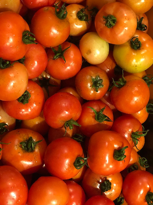Beasley Farms Pamella tomatoes