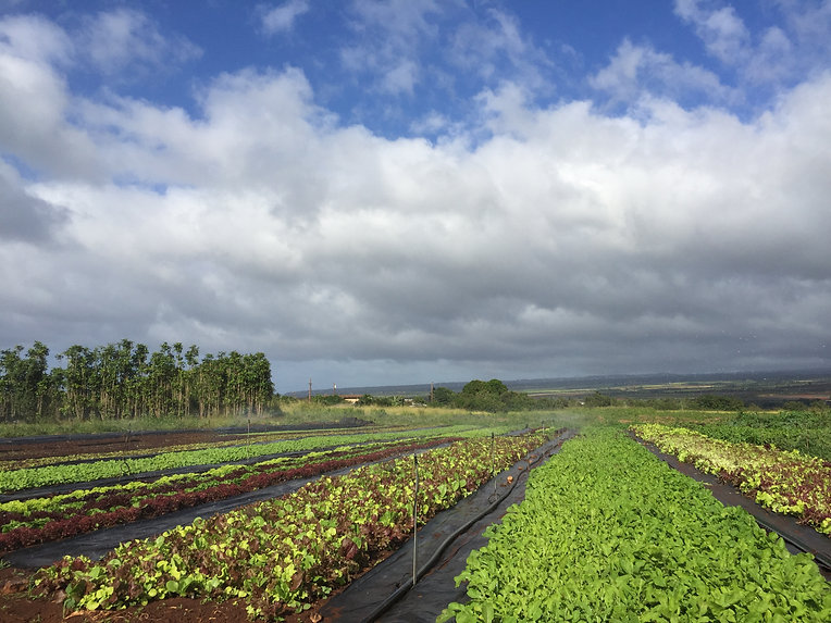 Diamon Island Farm North Shore Oahu