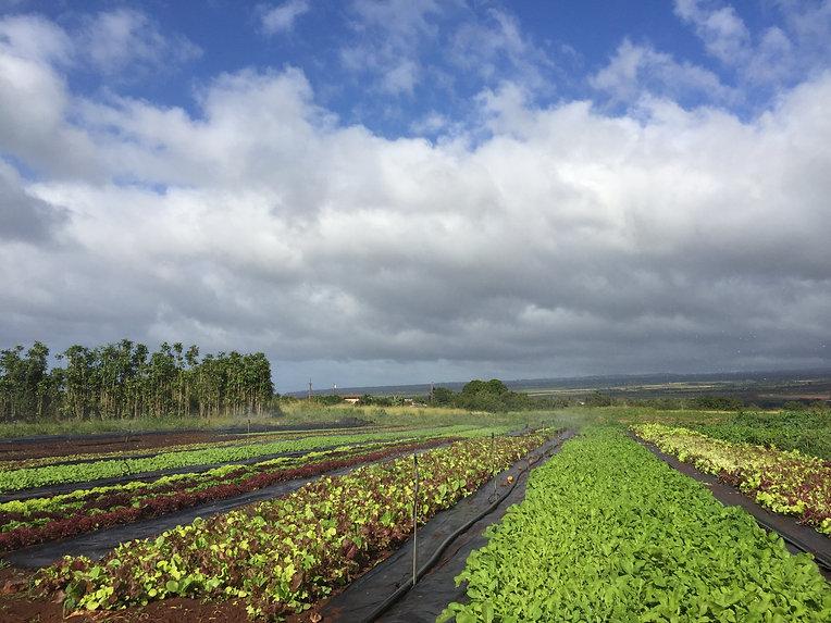 Diamon Island Farm North Shore Oahu