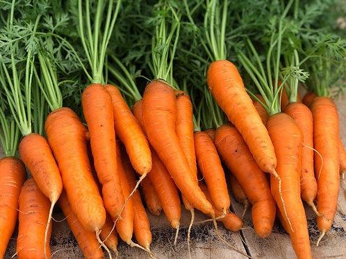 Beasley Farms Yaya Carrot with top