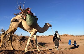 7day excursion with a camel ride to the desert camp