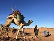 Camel trips and excursions from Dar Sidi Bounou