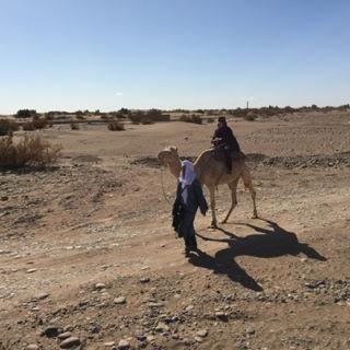 Camel Treks in the  Sahara Desert
