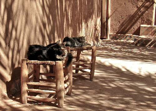 Bounou cats sleeping in the shade