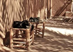 Bounou cats sleeping in the shade