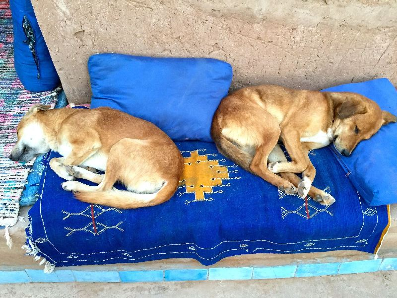 Desert dogs resting at DSB