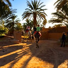 Sunset camel excursions from Dar Sidi Bounou
