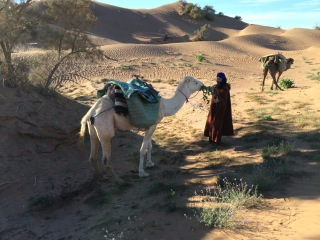 Camel Treks to the Desert Camp