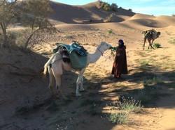 Camel Treks to the Desert Camp