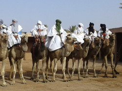 The Camel Racers