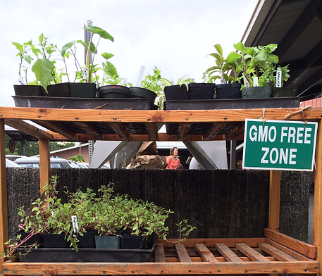 non-GMO plants