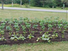 Garden Looking Good