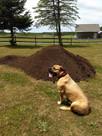 No till compost garden