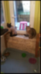Pension chat thoiry bellegarde saint genis pouilly genève saint julien bellegarde