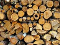 Imagem Intervenção Ambiental