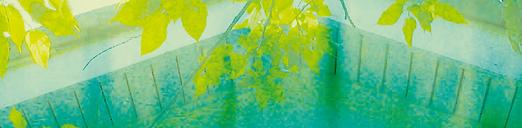 Paradise Design Background