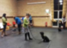 Dog Training Newbury
