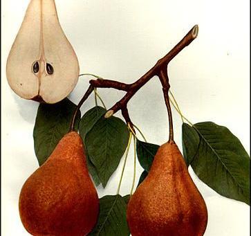 Raisin Pear Bundt Cake