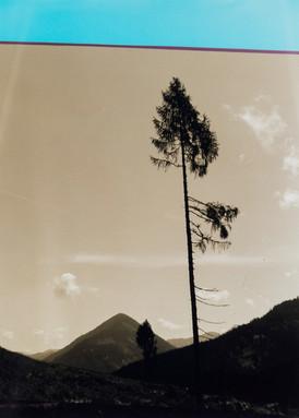 Großer Baum mit blauem Himmel